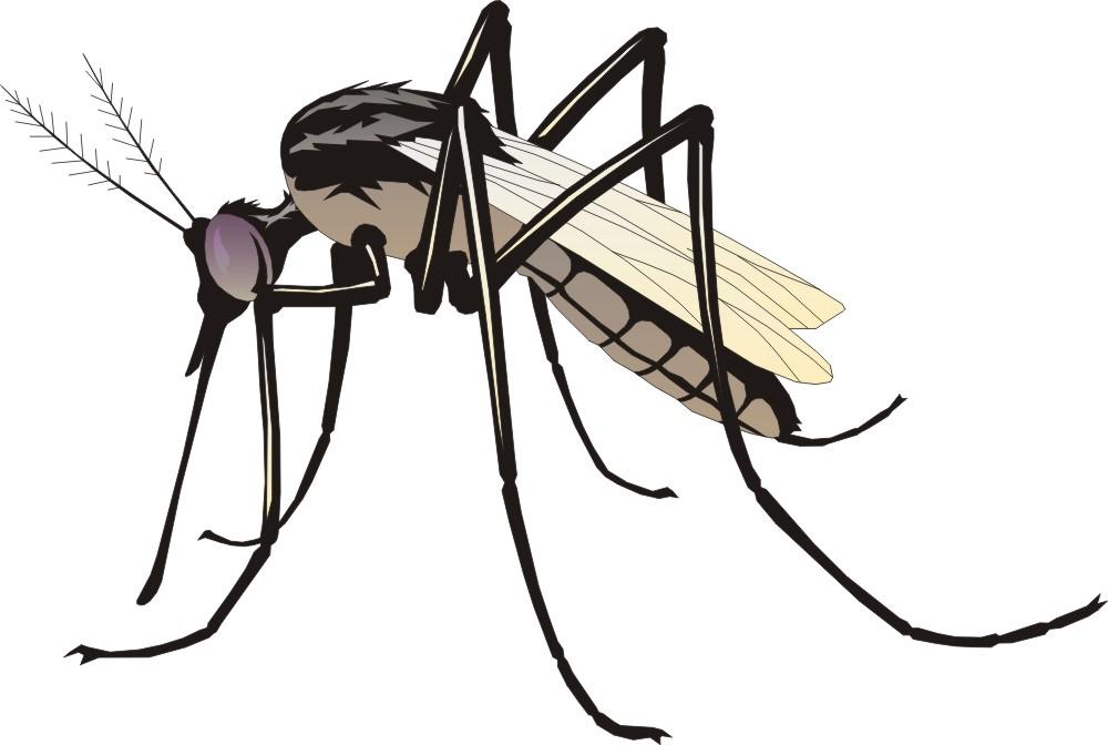 Комар- как избавиться